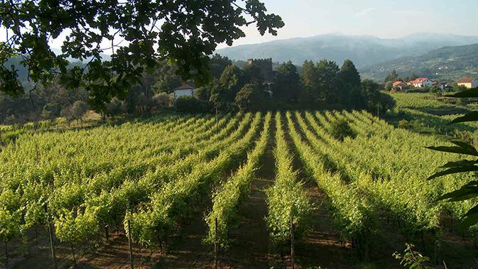 Vinho Verde - der leichte Portugieser