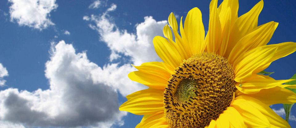 Miele sustainable innovations website